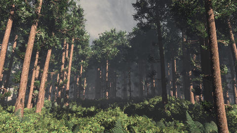 4K Epic Evergreen Forest Cinematic 3D Animation Flat 1 Animation