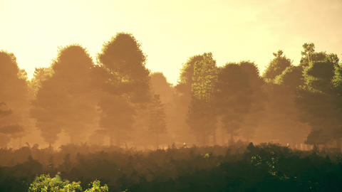 4K Lush Meadow and Forest Cinematic 3D Animation 1 Animation