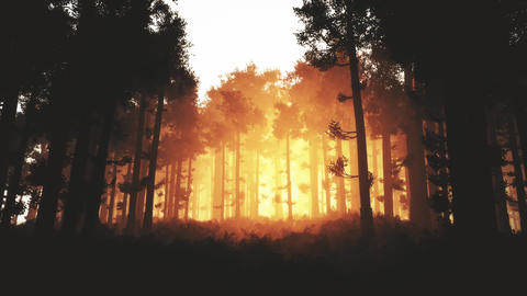 4K Wonderful Epic Evergreen Forest in the Sunset Cinematic 3D Animation 3 Animation