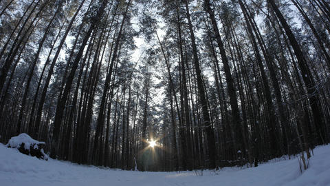 Man takes a walk through beautiful snowy forest scene with sun setting behind Footage