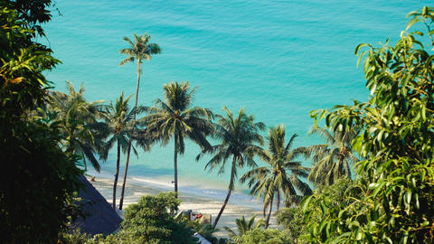 Green leaves of palmtree at blue sea water Footage