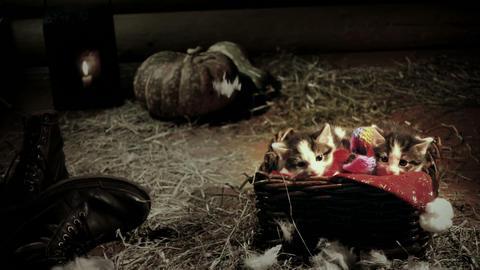 Little kittens in wicker basket in a barn slow motion Live Action