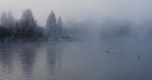 Swan Lake in winter in morning fog Live Action