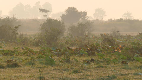 Birds at misty morning at the countryside of Cambodia Footage