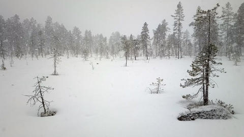 First snow 3. Dense big snow falls over forest Live Action