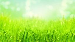 Sky And Grass 0