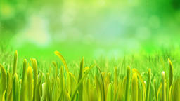 Sky And Grass 1