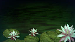 Water And Flowers 1