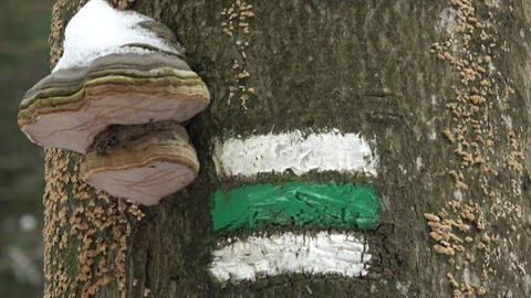 Marking of the tourist route.Tourist sign on tree Live Action