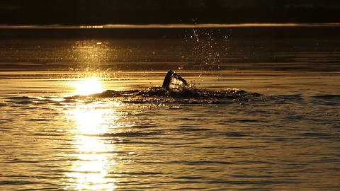 Young man swims crawl in a forest lake at sunset Footage