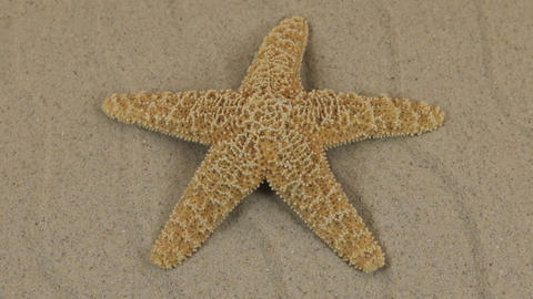 Rotations of the sea starfish on the dunes. Beauty in nature ビデオ