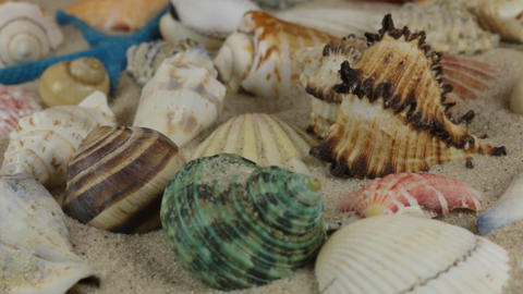 Rotations of sea shells and sea stars lying on the sand. Close-up Footage