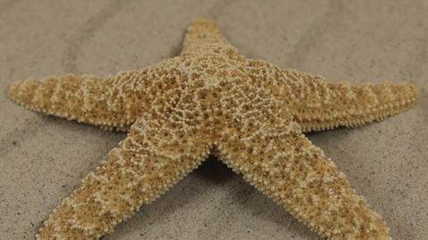 Close-up, the rotation of the starfish lying on the sand dunes Footage