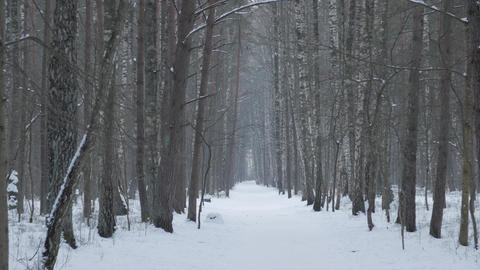 View of the snow-covered road in the winter forest Footage