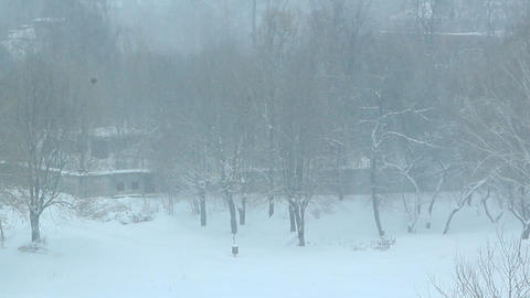 Abundant snowfall covering trees with snow. Snowy weather Live Action