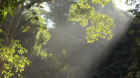 Forest with sunlight shining Footage