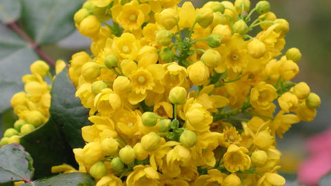 Flowers 1 1
