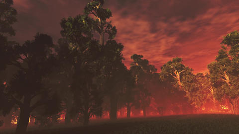 4K Mysterious Magic Forest in the Sunset Sunrise Pan 3 Animation