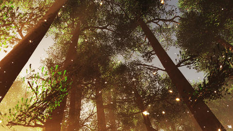 4K Mystic Fantasy Woods with Fireflies Tilt Down and Pan stylized Animation
