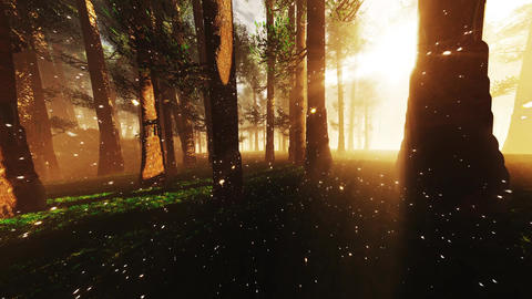 4K Mystic Fantasy Woods with Fireflies Wide Angle Pan stylized Animation