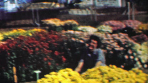 1961: Woman gardener tending big colorful flower garden Live Action