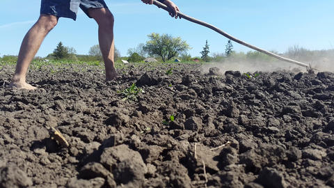 Man With Bare Feet Cultivates The Ground With A Rake Image