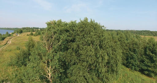 The trees in the field Footage