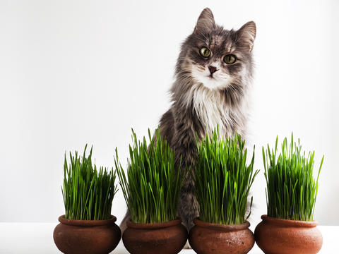 Sweet kitten and green grass in pots Photo