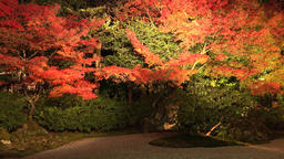 4K Kyoto entoku-in temple light-up Autumn Footage