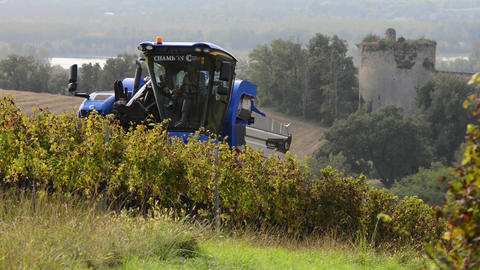 Grape Harvest Machine, Bordeaux Vineyard Image
