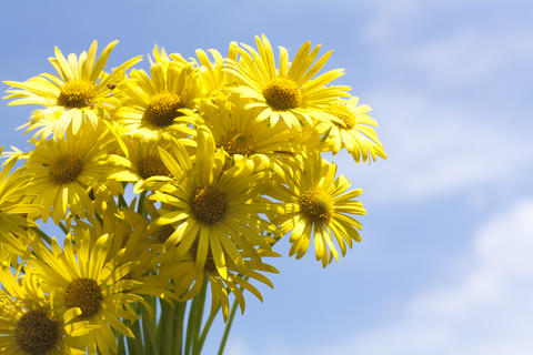 Bouquet of yellow flowers Photo