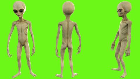 Alien talks. Loopable animation on green screen. 4k Animation