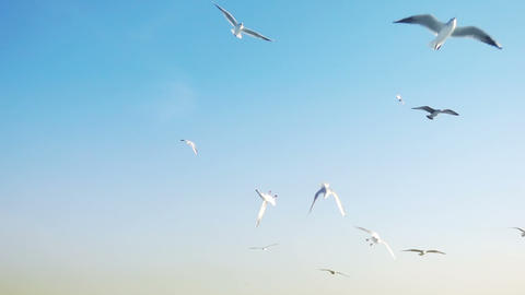 Bird Animal Seagulls Flying Archivo