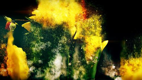 Dust Flowers Animation