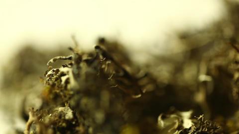 Grass Drug Mafia Stock Video Footage