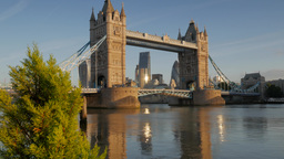 Static shot of Tower Bridge and The City, framed by a small bush on the left of  Footage