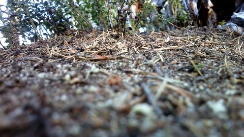 Ants In Ant Colony stock footage
