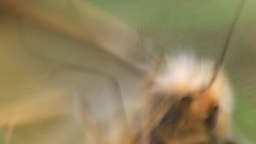 Butterfly tries to escape the web Footage
