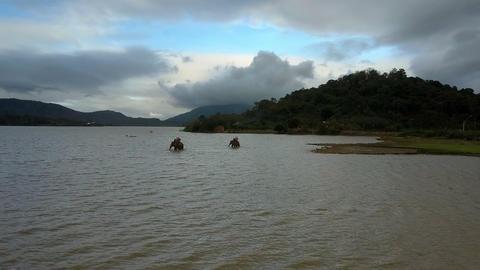 Large Elephants Walk along Lake Riding Tourists Footage