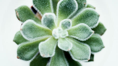 Green aloe succulent plant Footage