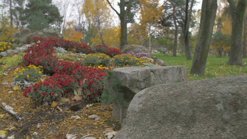 Landscape in Park Flowers and Stones Image