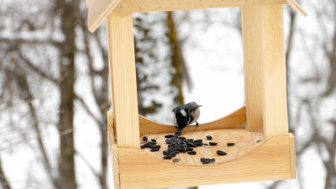 Bird feeder in the park Image