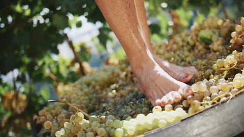 Female feet stomping white grapes in wooden shaft Footage