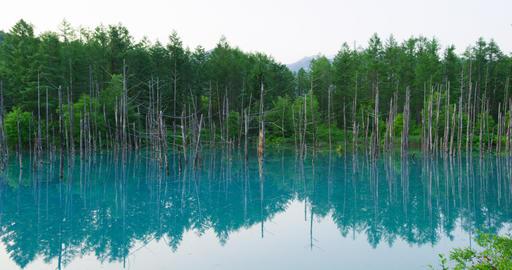 4K Biei Blue Pond 青い池 ビデオ