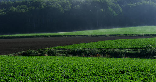 4K field Hokkaido 北海道の農地 Footage