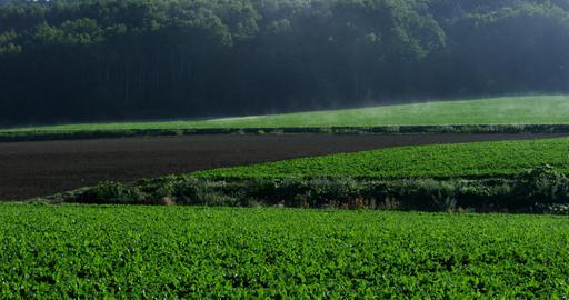 4K field Hokkaido 北海道の農地 Live Action