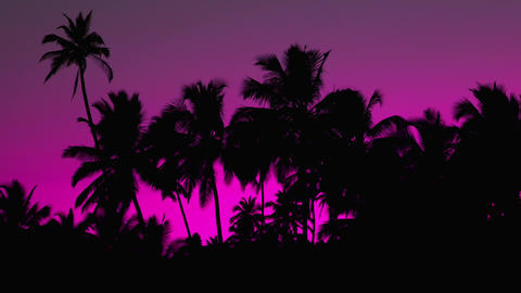 Magneta redviolet Color Sunset Palm 영상물