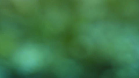 Abstract blur background of green glitter Footage