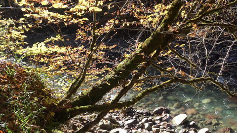 Sunny Autumn Day In The Foothills Of The Caucasus stock footage