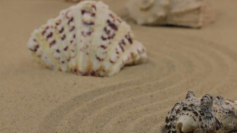 Approximation of seashells, lying on a zigzag from the sand. Dolly Footage